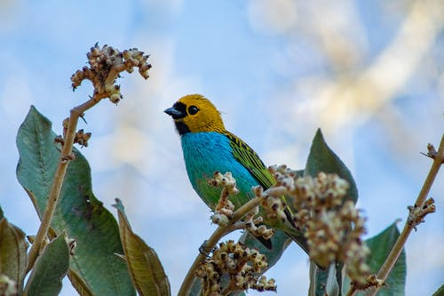 Blue and Green Bird on Green Plant