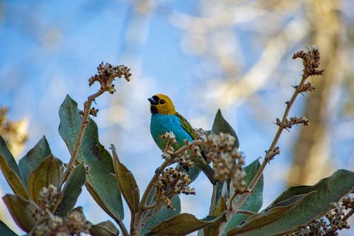 Blue and Yellow Bird Perched on Green Plant