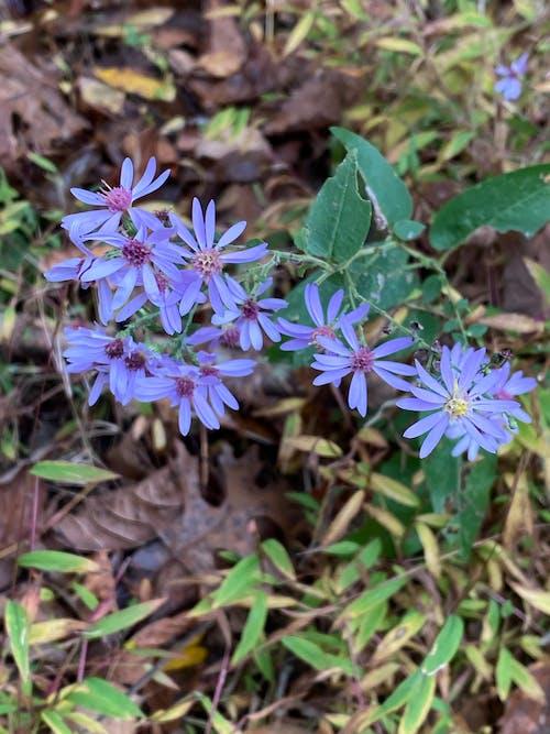 Free stock photo of bloom, landscape, wild flower