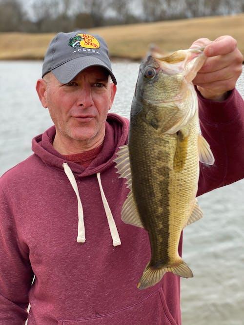 Free stock photo of bass, bass fisherman, black bass