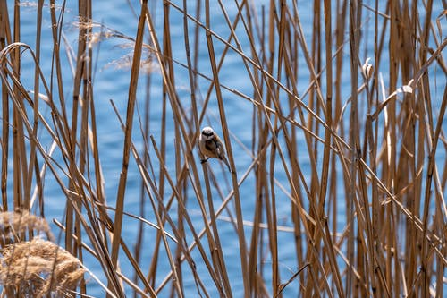 Fotos de stock gratuitas de agua, al aire libre, aves