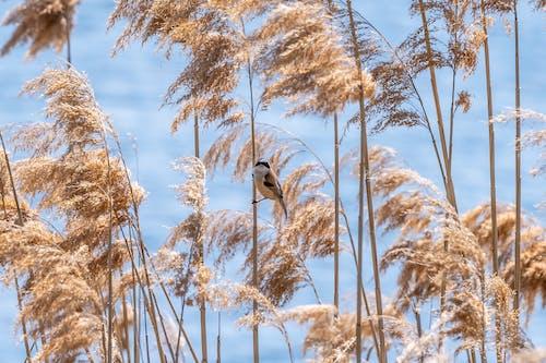 Fotos de stock gratuitas de al aire libre, aves, belleza de la naturaleza