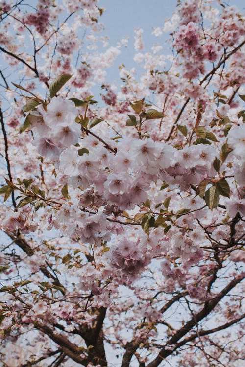 Free stock photo of blooming, branch, bright