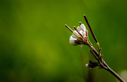 Free stock photo of close up view, flower, flowering