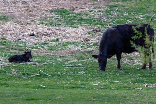 가정의, 가축, 검은색의 무료 스톡 사진