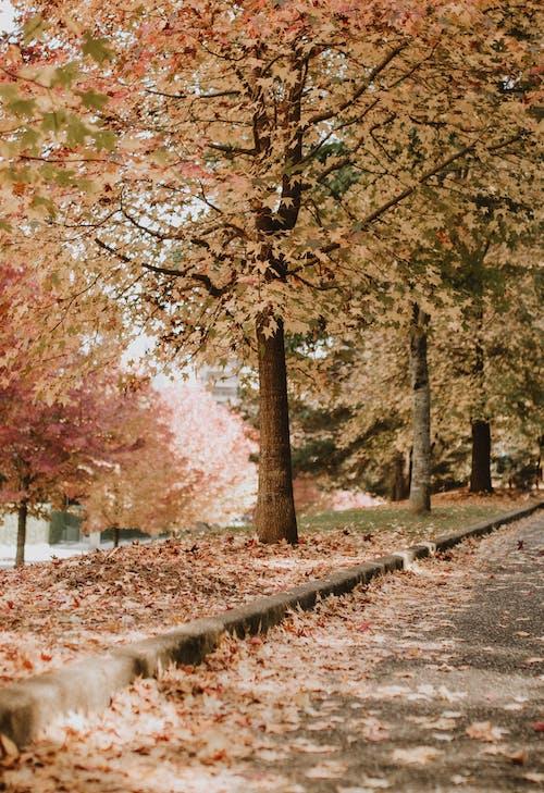 Gratis arkivbilde med årstid, atmosfera de outono, aveny