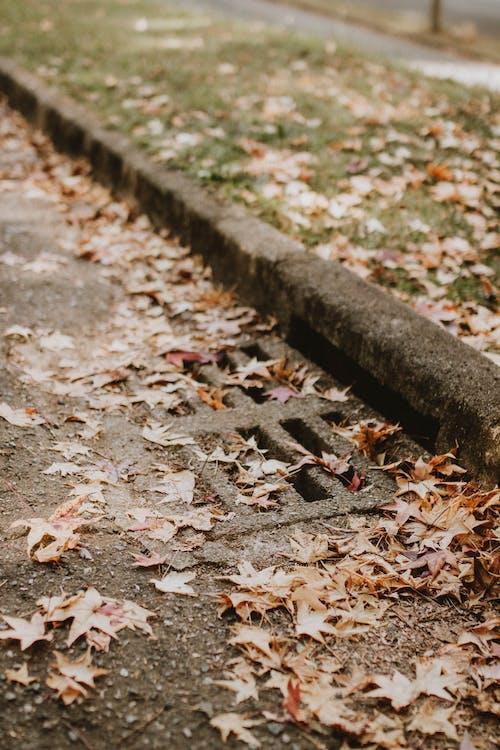Gratis arkivbilde med atmosfera de outono, bakken, blad