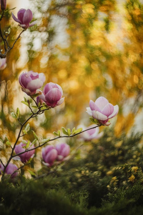Free stock photo of blooming, blur, bright