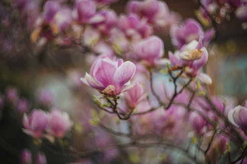 Free stock photo of flora, floral, flowers