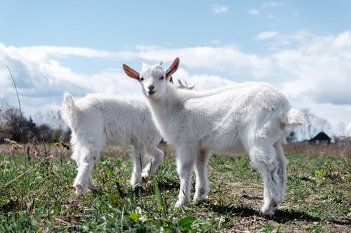 Free stock photo of animal, countryside, cute