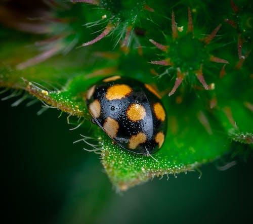 Yellow and Black Ladybug on Green Leaf