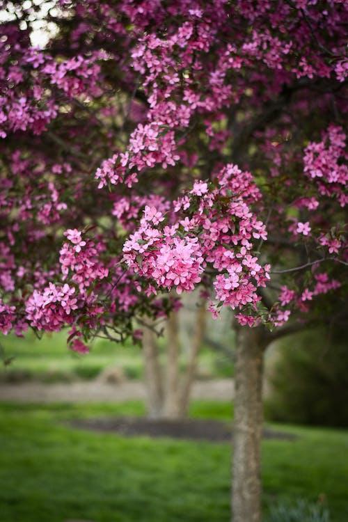 Pink Flowers on Green Grass Field