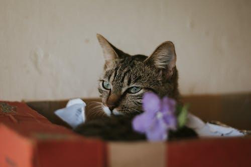 Free stock photo of cat, purple flower