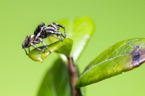 Macro Photography of Black Spider on Green Leaf