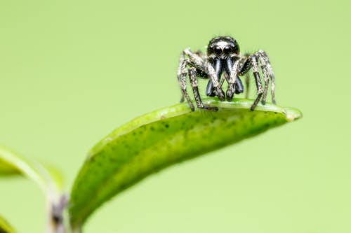 Macro Photography of a Spider on Leaf