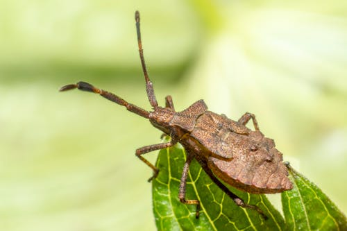 Brown and Black Insect on Green Leaf