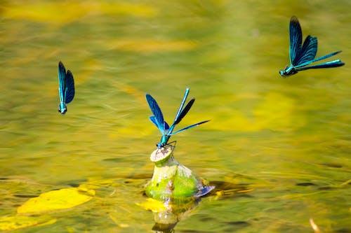 Free stock photo of animal, avian, beak