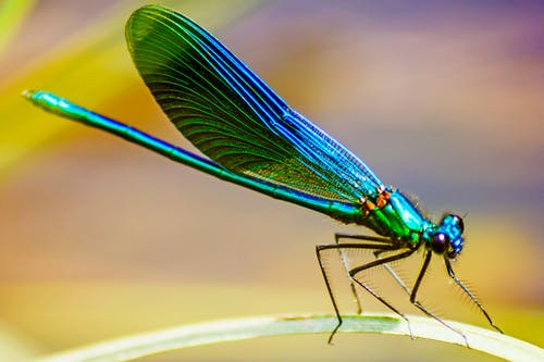 Green and Black Dragonfly in Close Up Photography