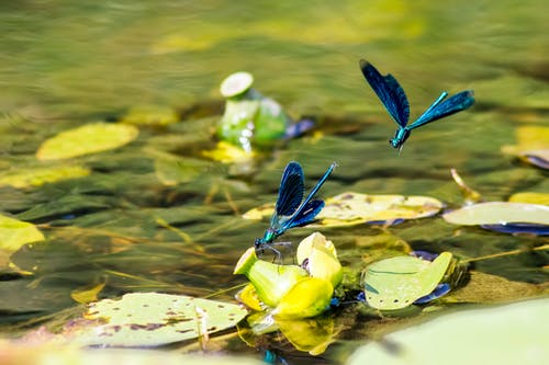 Blue Dragonfly on Green Leaves