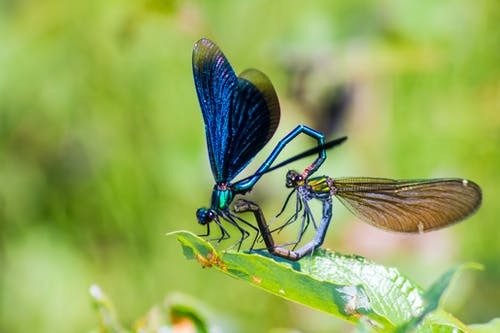 Free stock photo of animal, beautiful demoiselle, bug