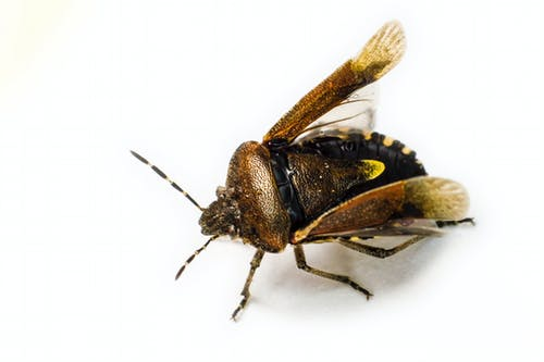 Free stock photo of animal, bug, estonia