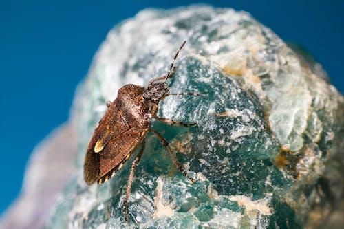 Free stock photo of animal, bright, bug