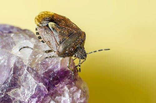 Free stock photo of animal, beetle, biology