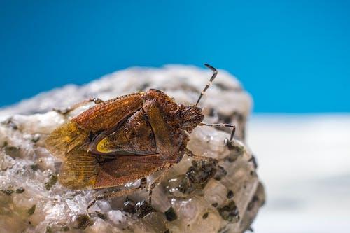 Free stock photo of animal, beach, bug