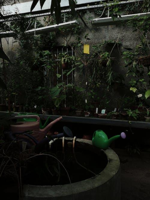 Fotos de stock gratuitas de abandonado, agua, árbol