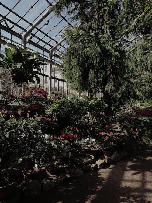 Fotos de stock gratuitas de árbol, arquitectura, botánico
