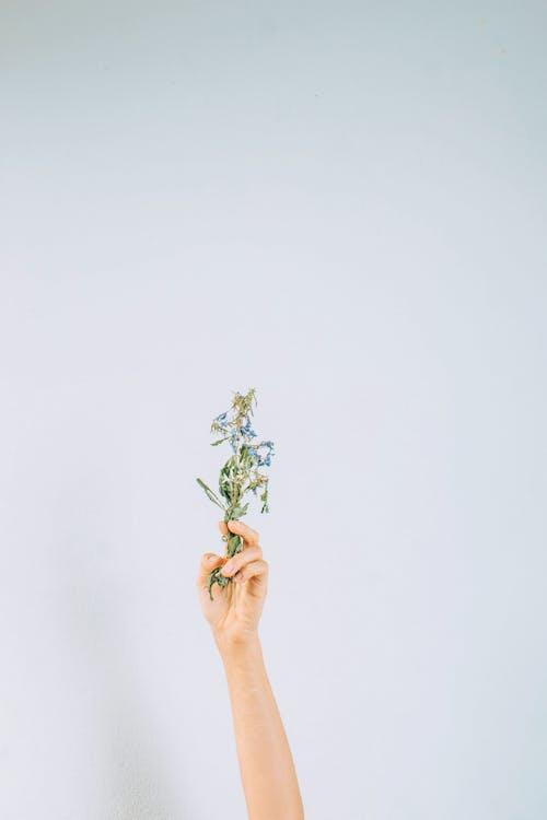 คลังภาพถ่ายฟรี ของ คอลเลกชันวินเทจ, ดอกไม้, ต้นไม้
