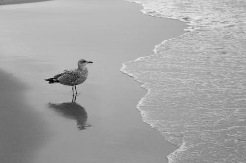 Δωρεάν στοκ φωτογραφιών με Surf, ακτή, άμμος