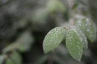 nature, rainy, leaves