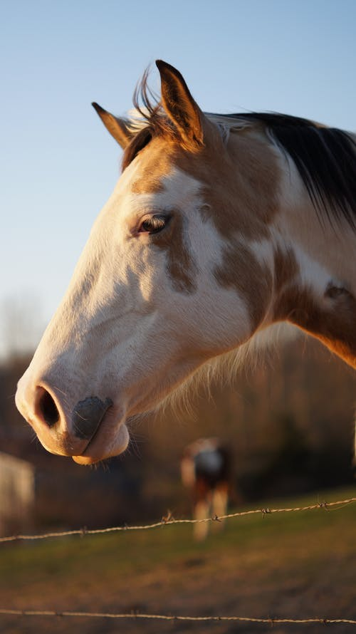 Close-Up View of White and Brown Horse