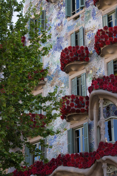 Red Flowers on White Concrete Building
