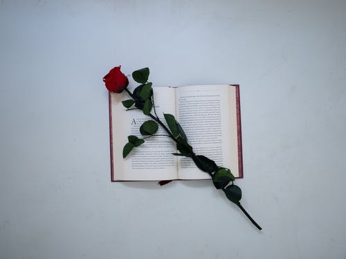 Free stock photo of book bindings, calligraphy, conceptual