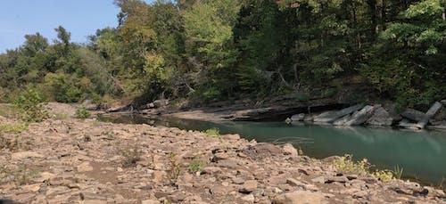 Free stock photo of creek, woods