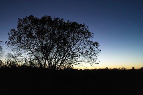Free stock photo of sunset, trees at dusk