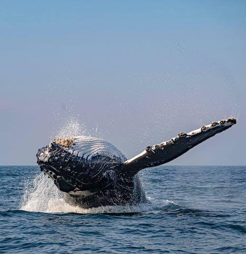 Immagine gratuita di animale acquatico, animale marino, cielo azzurro