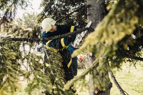 Man in Black Jacket and White Helmet Climbing on Tree