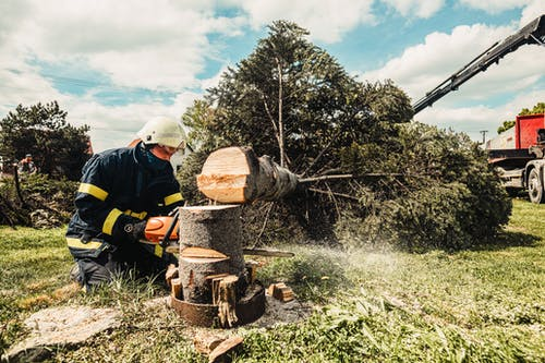 Free stock photo of a tree, firefighter firefighters, may