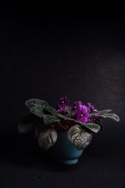 Purple Flower on Brown Stone