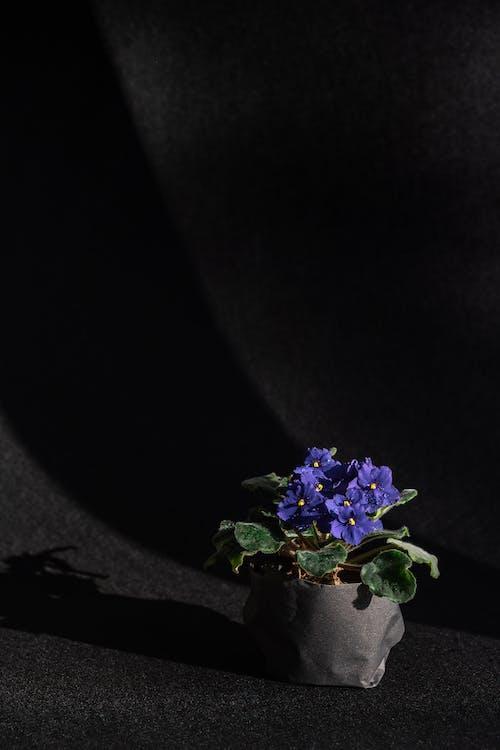 Purple Flower on Black Soil