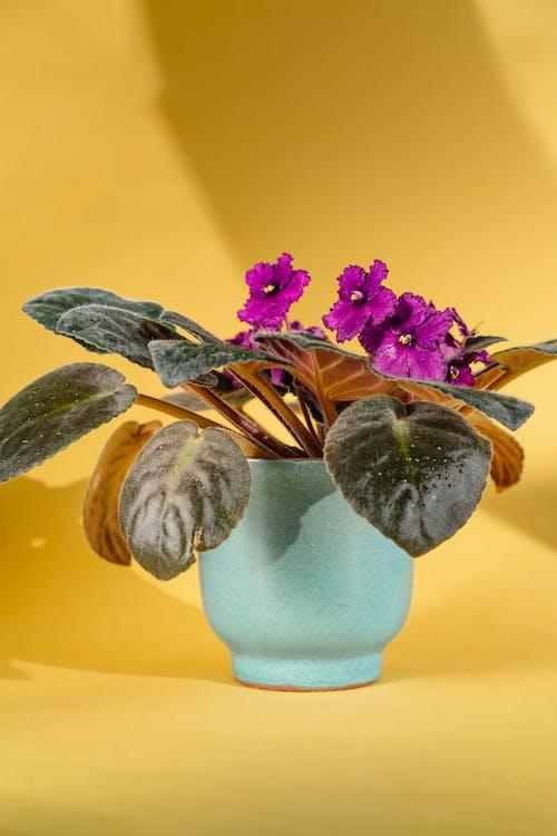 Purple Flower in Blue Ceramic Vase