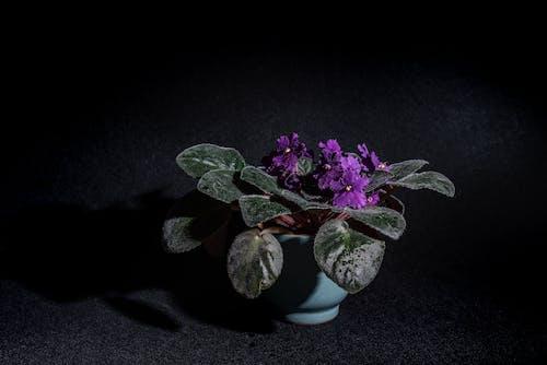Purple Flower on White Ceramic Vase