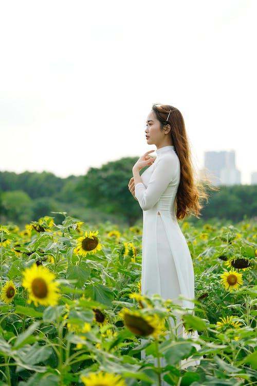 Elegant Asian woman in dress in sunflower field