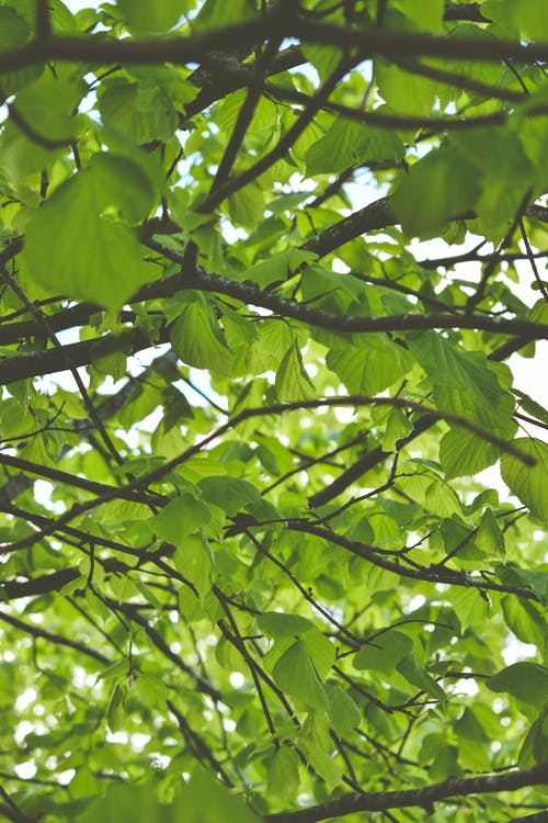 緑, 葉, 青葉の無料の写真素材