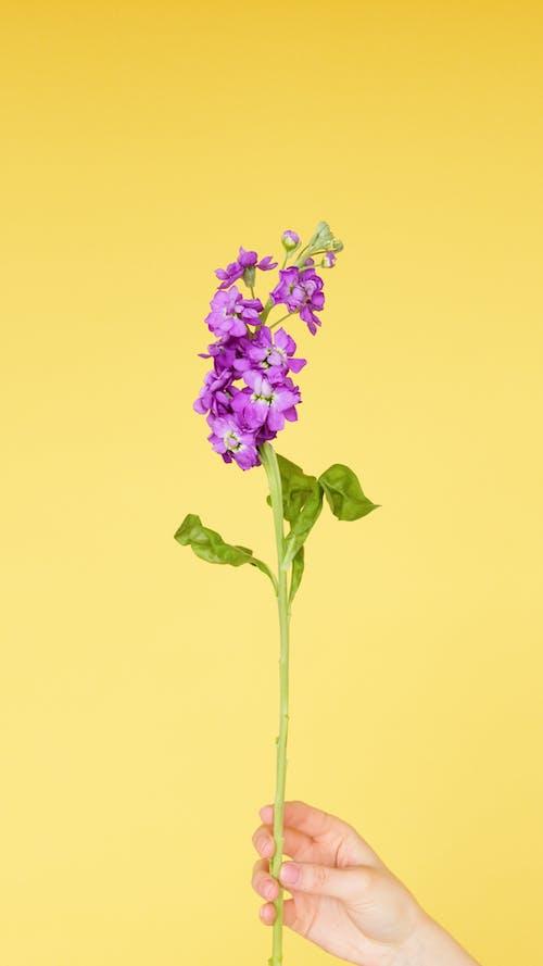 Darmowe zdjęcie z galerii z fioletowe kwiaty, liście, łodyga