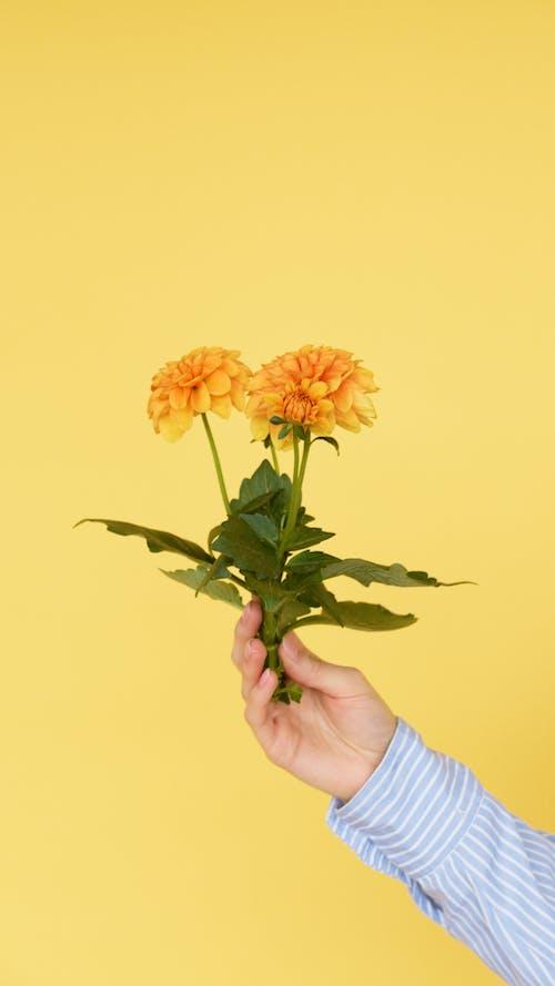 Darmowe zdjęcie z galerii z fotografia kwiatowa, kwiaty, liście