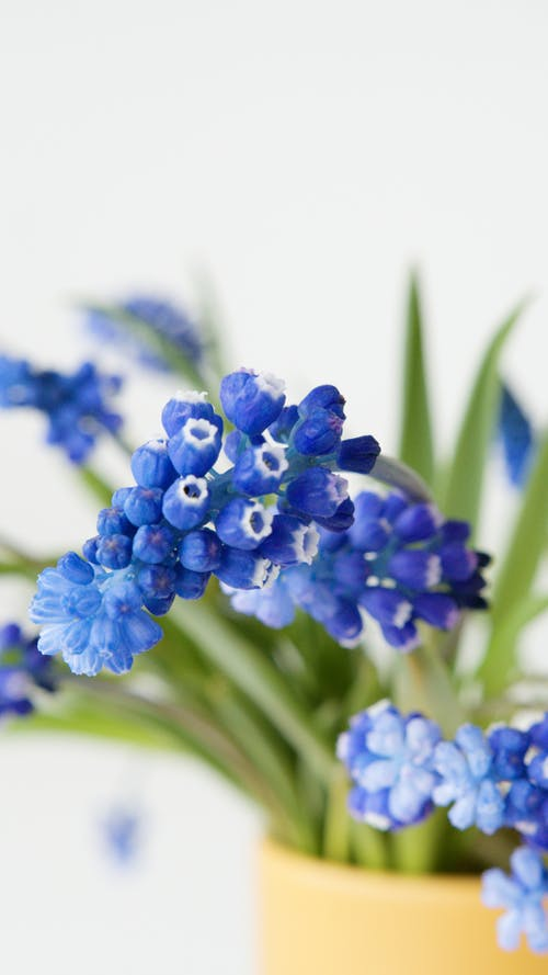Ilmainen kuvapankkikuva tunnisteilla kasvi, kasvikunta, kasvu